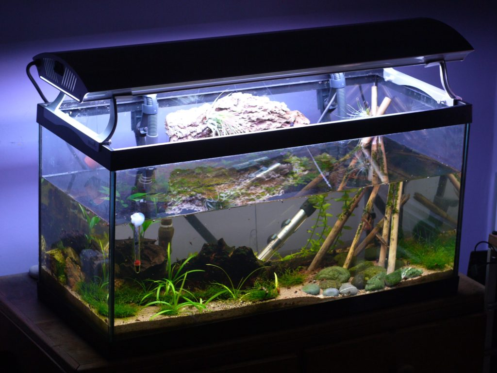The Best Fish Tank Filters Guide and Reviews