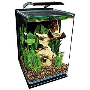 The Best Betta Fish Tanks Reviews and Guide