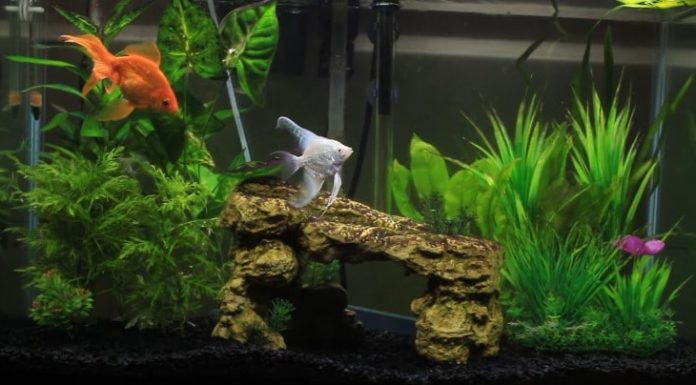 The Best Aquarium Heater: Definition, Guide and Review