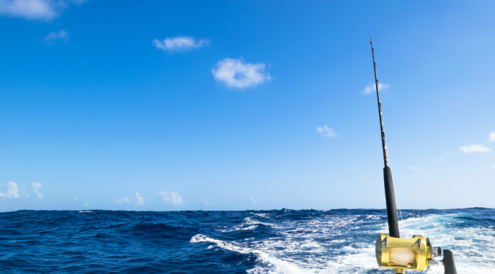 7 Impressive Tips for Saltwater Fishing In This 21 Century