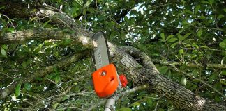 Top Rated Best Pole Saws 2020 Reviews on the Market Consumer Reports