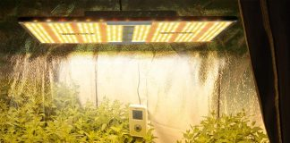 Best Led Grow Lights for Seedlings in 2020 Reviews & Buying Guide