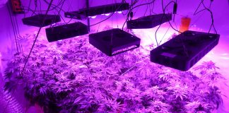 How to build DIY LED Grow Lights on a Budget: Do-It Yourself