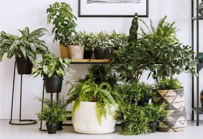 How to Humidify Plants: Increasing Humidity for Houseplants (DIY)