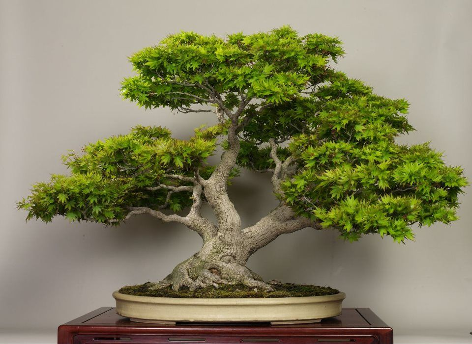 How To Care For Indoor Bonsai Trees | Easy DIY Method