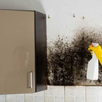 How To Get Rid Of Mold Smell Happy | Breath Better