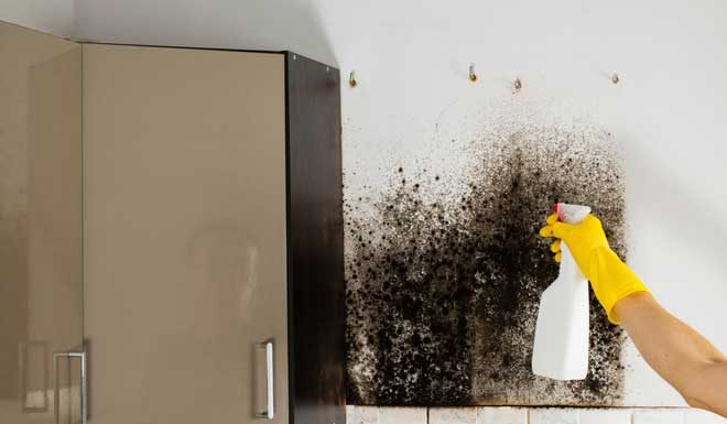 How To Get Rid Of Mold Smell Happy   Breath Better