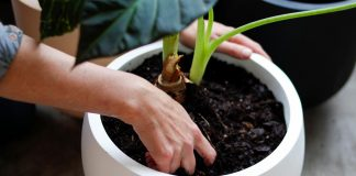 How To Pot Indoor Plants Without Drainage Holes   Easy Guide