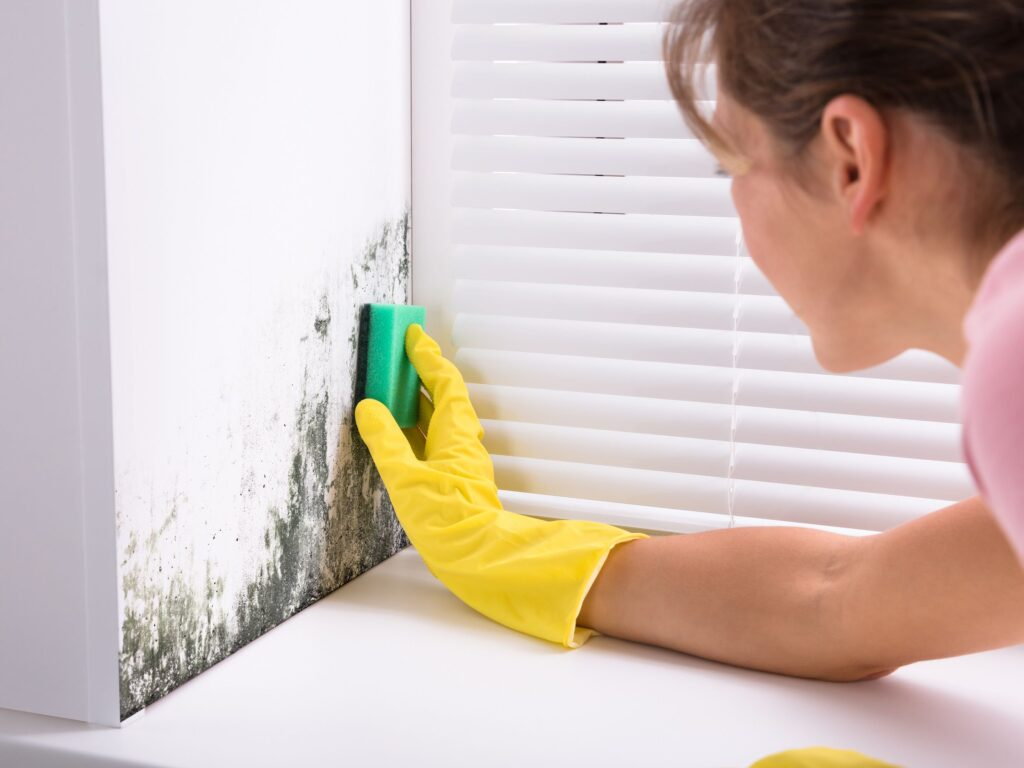 How To Get Rid Of Mold Smells