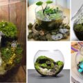 DIY: How to Make a Succulent Terrarium | Easily Plant Terrarium