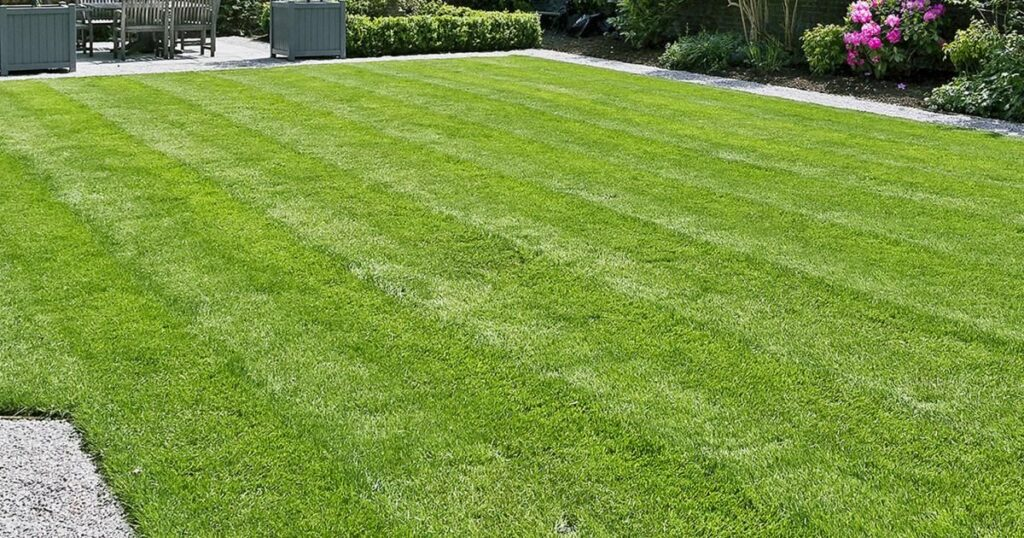 Lawn Care:Best Ways How To Care For Lawn - Beginner