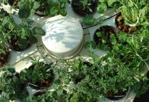 Indoor Hydroponics | How To Set Up | Everything You Need To Know