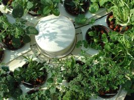 Indoor Hydroponics   How To Set Up   Everything You Need To Know