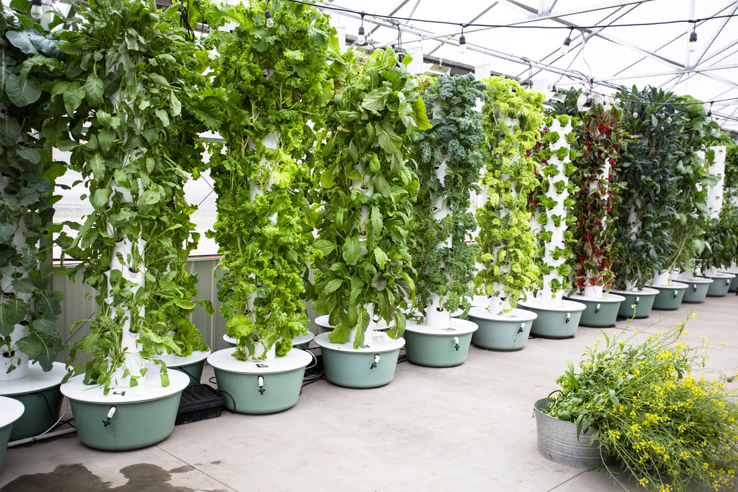How To Use A Tower Garden: Everything You Need To Know